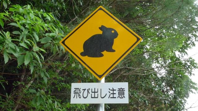 アマミノクロウサギの名前の由来や鳴き声を動画解説!昔話や見れる動物園情報も紹介!