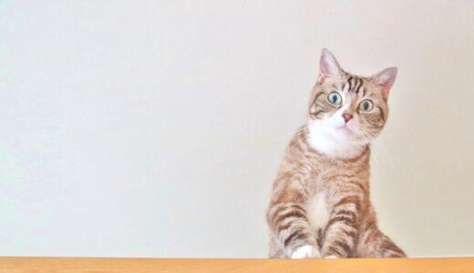 猫制作picoの通販購入方法や値段まとめ!ハンドメイドがリアルでヤバイ!